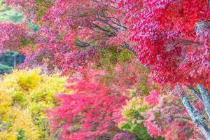 Maple trees in autumn
