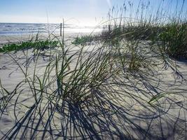Backlit grass in sand next to water at Daytona Beach, Florida photo