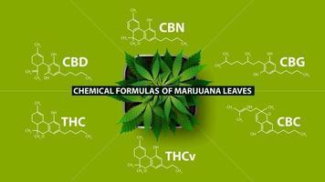Chemical formulas of natural cannabinoids, green poster with Chemical formulas of cannabinoids and plant of cannabis, top view vector