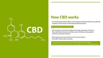 How CBD works, green and white information poster with cannabidiol chemical formula vector