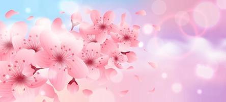Fondo de flor de cerezo vector