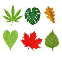 Autumn garden leaf collection vector
