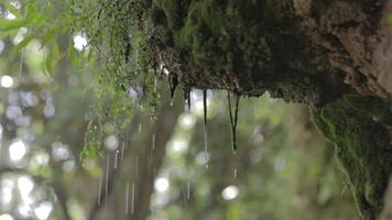 Regentropfen Wald, Moos mit Audio