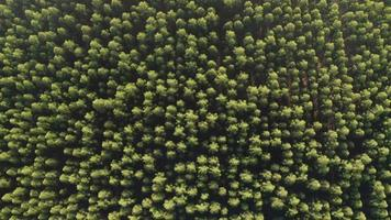 vista superior aérea no início do outono na floresta. bela vista na floresta tropical verde floresta. video