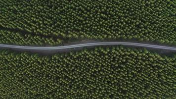 Aerial top down view of country road in forest. Cinematic drone shot flying over gravel road in pine tree forest video