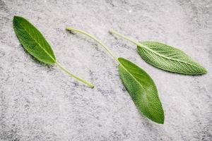 Sage leaves on a gray background photo