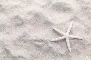 White starfish in sand photo