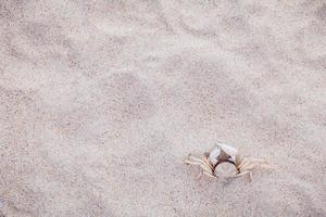 White crab in the sand photo