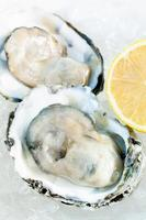 Fresh oysters on ice photo