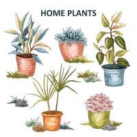 conjunto de plantas caseras vector