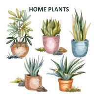 colección de plantas caseras vector