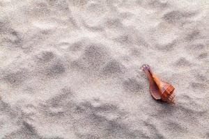 Seashell in sand with copy space photo