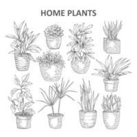 plantas caseras dibujadas a mano vector