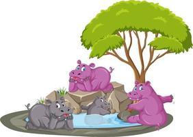 Escena aislada con grupo de hipopótamos en el estanque vector