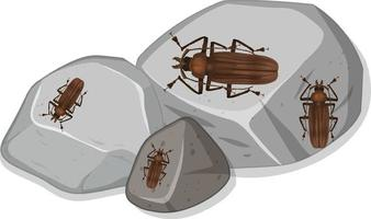 Top view of many titan beetle on stones vector