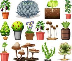 Conjunto de diferentes plantas en macetas aislado sobre fondo blanco. vector