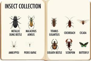 conjunto de colección de insectos en el libro. vector