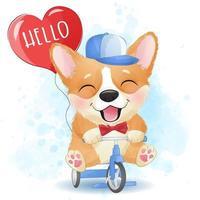 Cute little corgi riding a bicycle vector