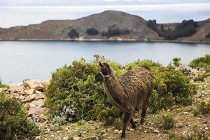 Isla del Sol on lake Titicaca in Bolivia photo