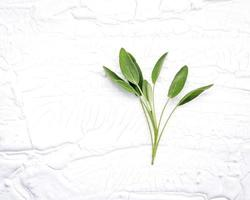 Fresh sage on a shabby white background photo