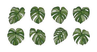 Monstera deliciosa arte de línea de hoja de planta aislado sobre fondo vector