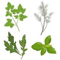 Set of fresh herbs. vector