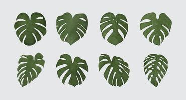 Monstera Deliciosa plant leaf watercolor style isolated on background vector