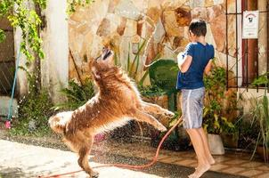 Cute boy giving his golden retriever dog a hose bath on a hot summer day photo