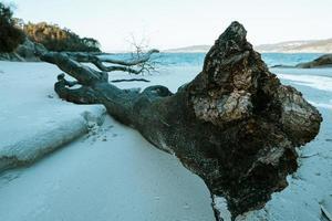 Una playa de arena blanca en España durante un día brillante un tronco caído gigante foto