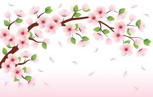 Beauty of The Blooming Sakura vector