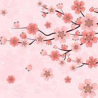 Beautiful Gradient Pink Cherry Blossom Flowers vector