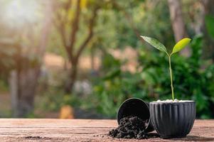 concepto de plantar un árbol del amor