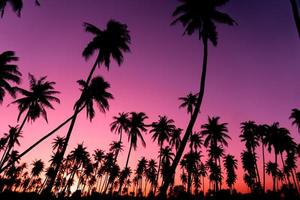 Silhouette of coconut palm trees with sunset and flare sky background