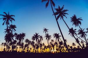 Silhouette of coconut palm trees with sunset
