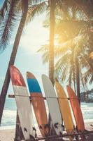 Many surfboards beside coconut trees at summer beach with sun light and blue sky photo