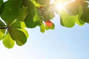 Green leaf with blue sky background and sunlight photo
