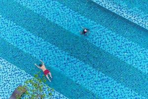 Aerial top view of swimmers in the pool