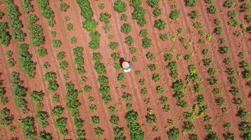 Aerial top view of farmers working on cassava farm photo