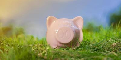Pink piggy bank on grass under blue sky