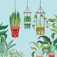 Plantas de interior en perchas de macramé escena de jardín vector
