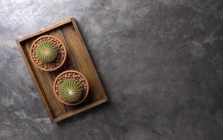 Two view of cacti in a wood box