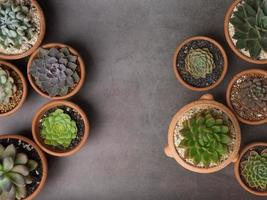 Succulents in pots on gray concrete background photo
