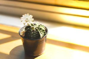 Succulent plant and a white flower