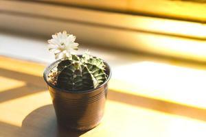 Planta suculenta y flor blanca.