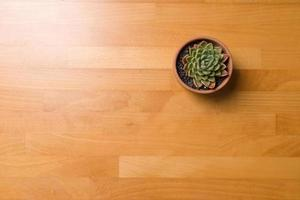 Succulent in a pot on a wooden table photo