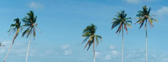 Minimal tropical coconut palm trees in summer with sky background