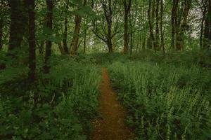 Trail path through lush forest photo