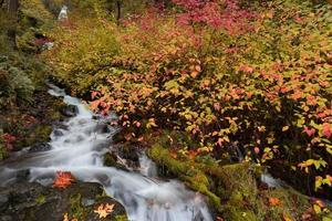 Flowing creek waterfall surrounded by vibrant fall foliage
