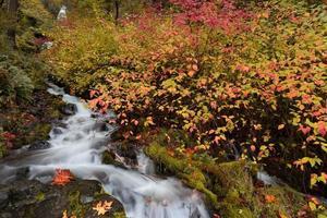 Cascada de arroyo que fluye rodeada de vibrante follaje de otoño
