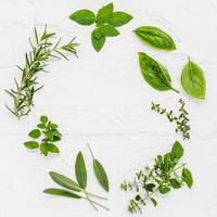 círculo de hierbas verdes frescas